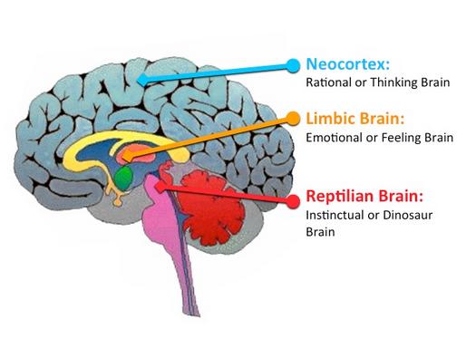 neo-cortex